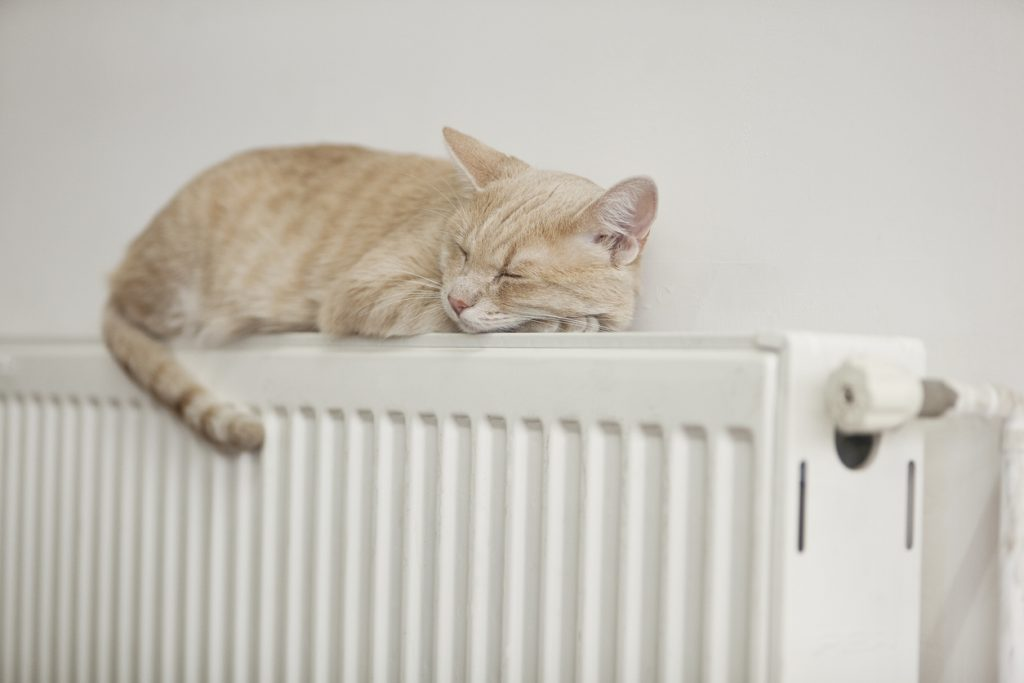 Your cat may enjoy the heat of the radiator, but radiator gas leaks can be harmful to pets.