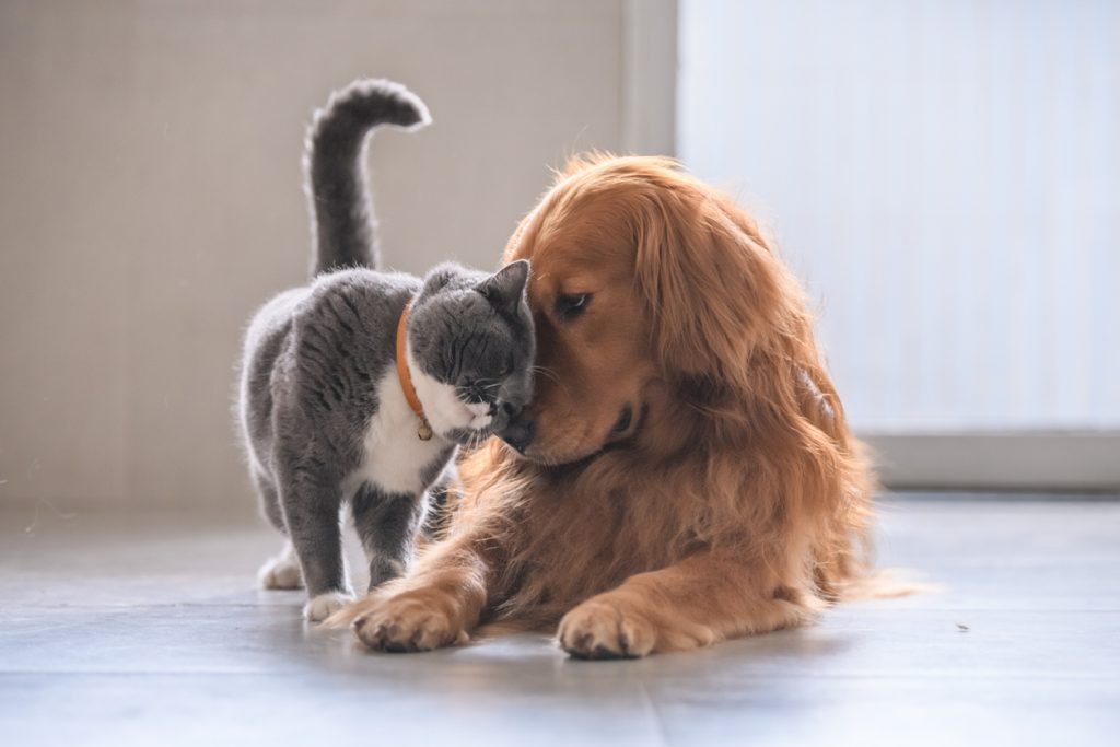 Pets, like this cat and dog, should factor into your home safety plans
